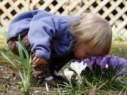 Opasne sobne biljke
